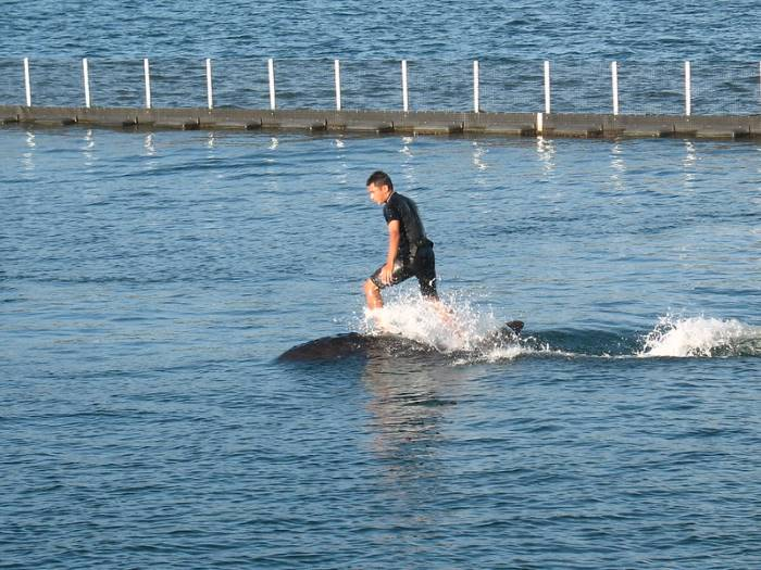 Man Riding on Dolphin at Ocean Adventure